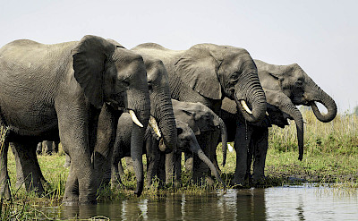 Elephant herd in Liwonde. ©TO