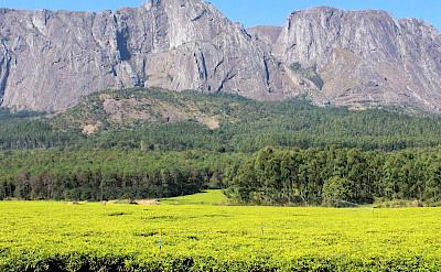 Mount Mulanje in Malawi. ©TO