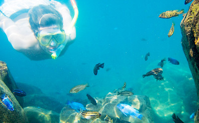Snorkeling in Lake Malawi with Cichlid fish. ©TO