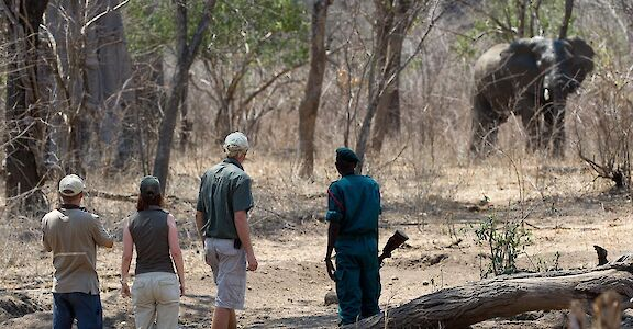 Walking safari in Majete Wildlife Reserve. ©TO
