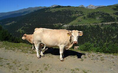 Setcases, Catalan Pyrenees, Spain. Flickr:Angela Llop