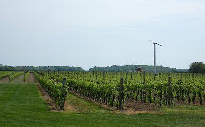 Niagara Winery.