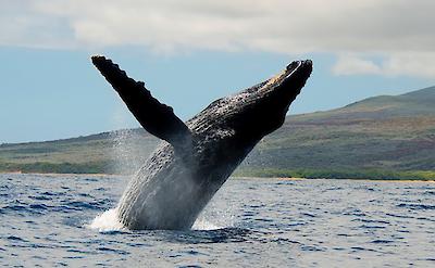 Jennfindlay Maui