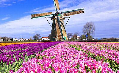 Windmills & tulips = traditionally Holland! Flickr:Matheus Swanson