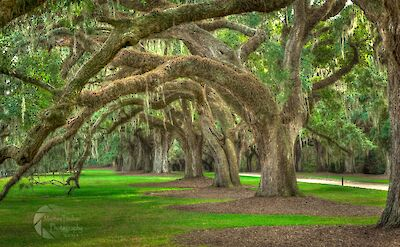 Boon Hall Plantation in South Carolina. Love that Spanish moss! Flickr:Matthew Trudeau Photography