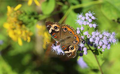 Flora & fauna in Beaufort County, South Carolina. Flickr:John Flannery