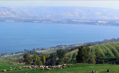 Sea of Galilee, Israel. Flickr:Larry Koester