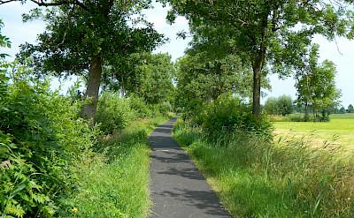 Quiet bike paths everywhere in Holland! Flickr:Ruben Holthuijzen