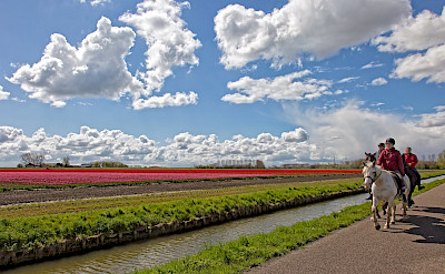 Horseback riders sharing the bike path in the Netherlands. © Hollandfotograaf