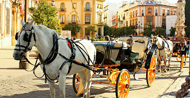 Horse-drawn carriages outside Seville Cathedral on Plaza Virgen de Los Reyes, Sevilla, Spain. Photo via Flickr:Jess R.