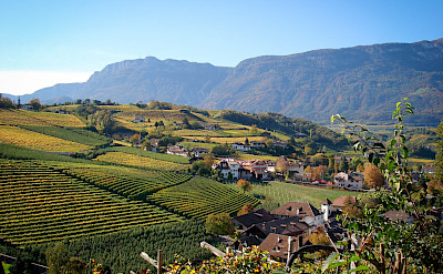 Vineyards en route Bolzano to Venice Bike Tour.