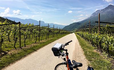 Enjoying the vineyards along the Bolzano to Venice Bike Tour.