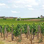 Bordeaux Wine Country Photo