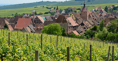 Scenic vineyards and countryside outside Riquewihr in Alsace, France. Photo via Flickr:Pug Girl