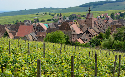 Scenic vineyards and countryside outside Riquewihr in Alsace, France. Flickr:Pug Girl