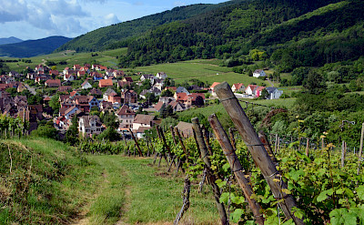 Vineyards around Riquewihr, Alsace, France. Flickr:Pug Girl