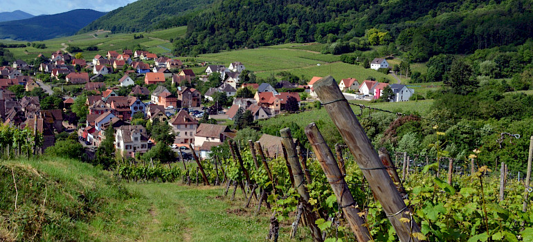 Vineyards around Riquewihr, Alsace, France. Photo via Flickr:Pug Girl