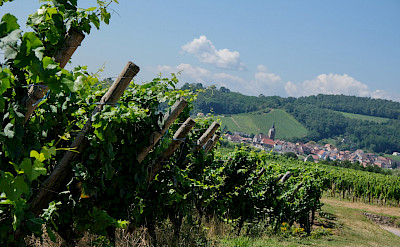 Wine Route through Alsace, France. Flickr:Claudia Schillinger