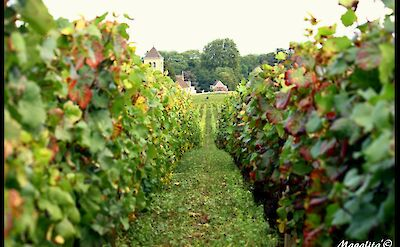 Staring down the vines in Burgundy, France. Flickr:Magalitab
