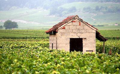 Burgundy wine region. Flickr:Megan Cole