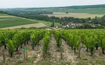 Vineyards in Chablis, Burgundy, France. Flickr:Anna + Michal