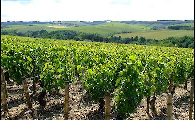 Chablis, Burgundy, France. Flickr:Peter