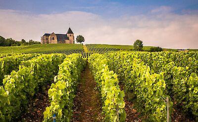 Vineyards all over France! Flickr:Winniepix