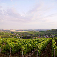 Cher River valley with lush vineyards. Flickr:JPC24M