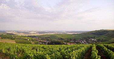 Cher River valley with lush vineyards. Photo via Flickr:JPC24M