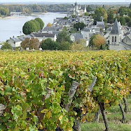 Vineyards along the Loire River. Photo via TO
