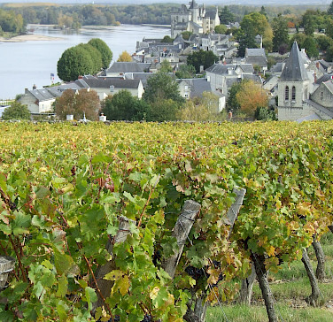 Vineyards along the Loire River! Photo courtesy Tour Operator.