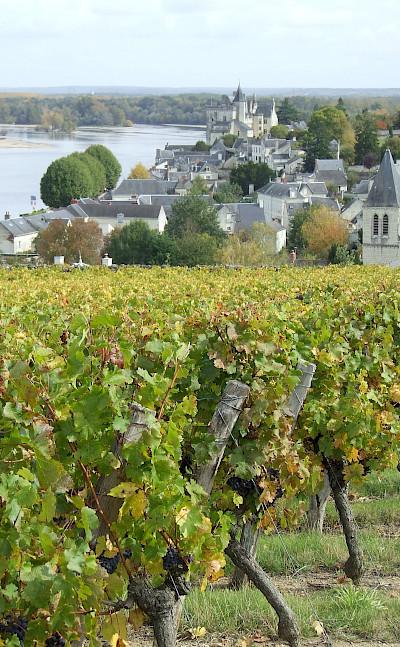Vineyards along the Loire River. Photo via TO