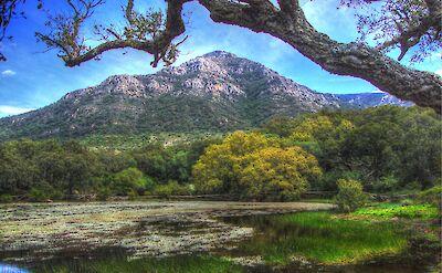 Alcornocales National Park, Alcalá de los Gazules, Spain. Flickr:Alcalaina