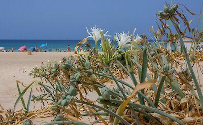 Zahara de los Atunes, Spain. Flickr:Eneko Bidegain