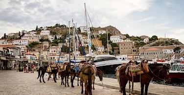 Taxis await on Hydra Island, Cyclades, Islands, Greece.