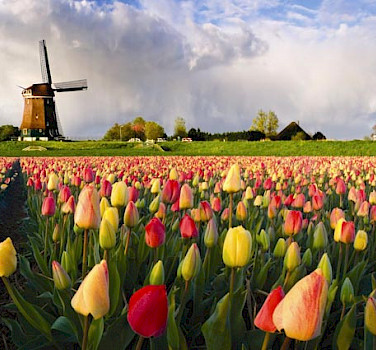 Dutch Highlights Tulip Tour