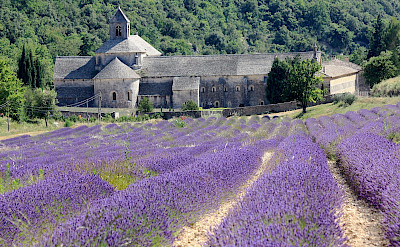 Abbaye de Sénanque in Provence, France. Flickr:Andrea Schaffer