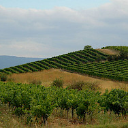 Vineyards in Provence! Flickr:Jay Bergensen