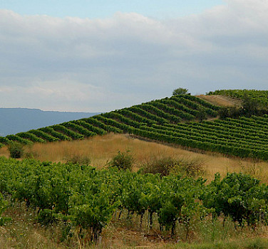 Vineyards in Provence! Photo via Flickr:Jay Bergensen