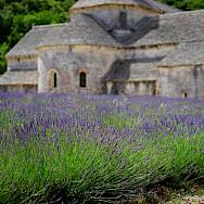 Abbaye de Sénanque among lavender fields in Provence.