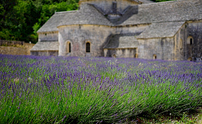Abbaye de Sénanque among lavender fields in Provence.