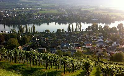 Vineyards surrounding Stein am Rhein, Switzerland. Photo via Flickr:Marc van der Chijs