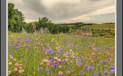 Wildflowers in Azay-le-Rideau, France. Flickr:@lain G