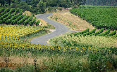 Biking amidst vineyards in France! Flickr:Hans Splinter