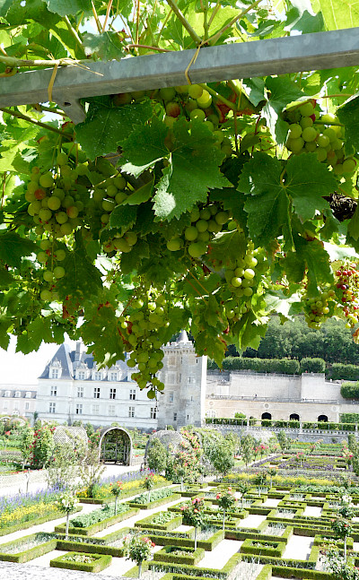 Jardins de Villandry at the Château. Photo courtesy TO