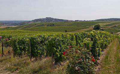 Sancerre vineyards throughout France. Flickr:Barberousse