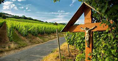 Quiet roads through vineyards along the German Wine Route. Photo via Flickr:Justin Leonard