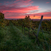 German Wine Route Photo