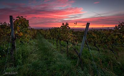 Wasgau wine region in Rhineland-Palatinate, Germany. Photo via Flickr:Pixelfreude Photography