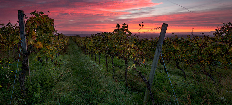 Wasgau wine region in Rhineland-Palatinate, Germany. Photo via Flickr:Pixelfreude Photography
